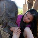 Lek Chailert, Elephant Conservationist